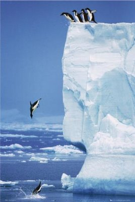 Penguins jumping off cliff, courtesy rickbutts.com